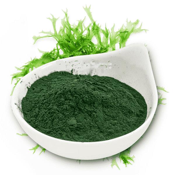 tảo spirulina dạng bột nhật bản, bột tảo spirulina nhật, bột tảo xoắn spirulina, bột tảo biển mua ở đâu, bột tảo spirulina cho bé, tảo xoắn spirulina dạng bột, cách sử dụng bột tảo spirulina, mua bột tảo biển spirulina ở đâu, mua bột tảo spirulina ở đâu