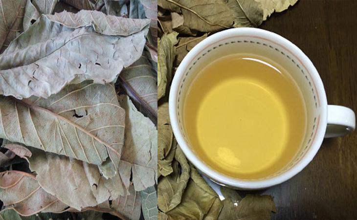 trà ổi giảm cân, trà lá ổi giảm cân