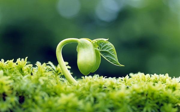 uống bột mầm đậu nành đúng cách, cách uống mầm đậu nành tăng vòng 1, cách uống mầm đậu nành giảm cân, uống mầm đậu nành vào lúc nào, cách uống mầm đậu nành tăng cân, cách uống mầm đậu nành để tăng cân, cách uống mầm đậu nành nguyên sơ
